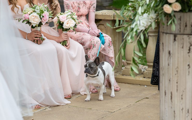 photo of dog at a wedding at Woodhill Hall