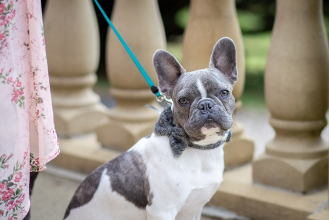 Photo of the couples dog at Woodhill Hall