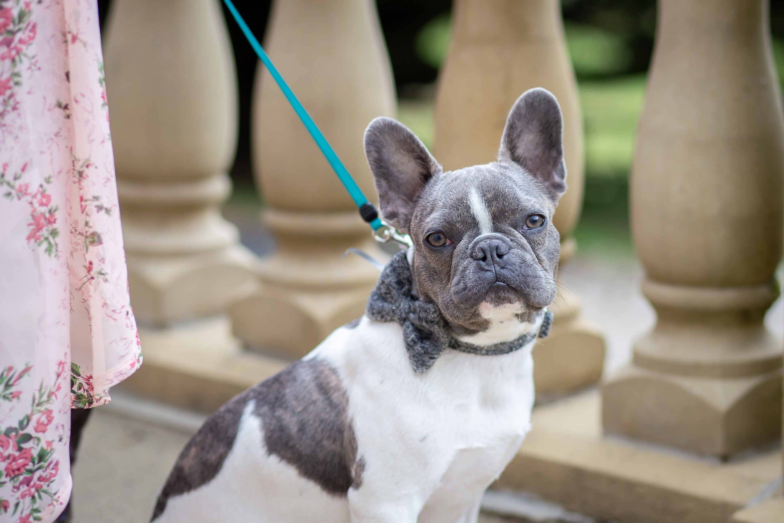 Cute dog at a Woodhill Hall wedding